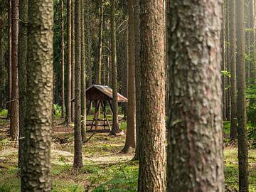 Spitzstein in der Sächsischen Schweiz - Alte Waldschänke von Pixelwerk