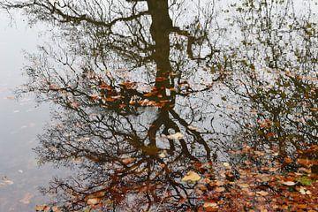 Boom weerspiegelt in water van Susan Dekker