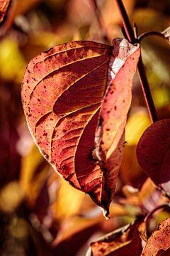 Herfstkleuren van Rob Boon
