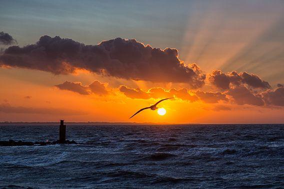 Zonsondergang met zonnestralen, vogel en wolken  van Bram van Broekhoven