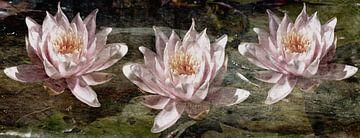 Waterlelies van Christine Nöhmeier