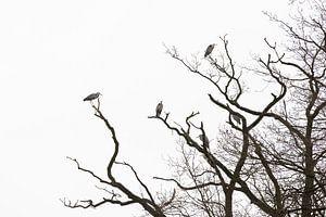 Reigers in kale boom van