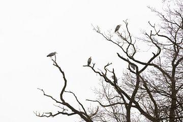 Reigers in kale boom van Marijke van Eijkeren