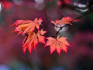 Herbst   von Ferhat Yildiz