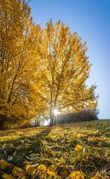 Gouden herfstochtend in Engenhahn im Taunus van
