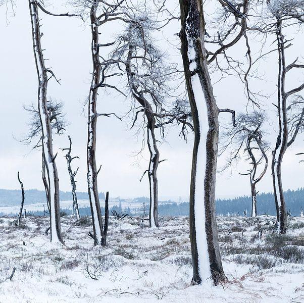Winter in de Hoge Venen van Joshua van Nierop