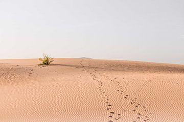Fußspuren im Sand von Simone Neeling