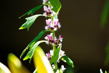 Paarse bloem von Suzanne de Jong
