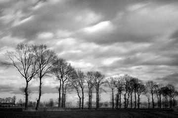 bomenrij buitengebied Gemonde, Sint-Michielsgstel von Arnoud Kunst