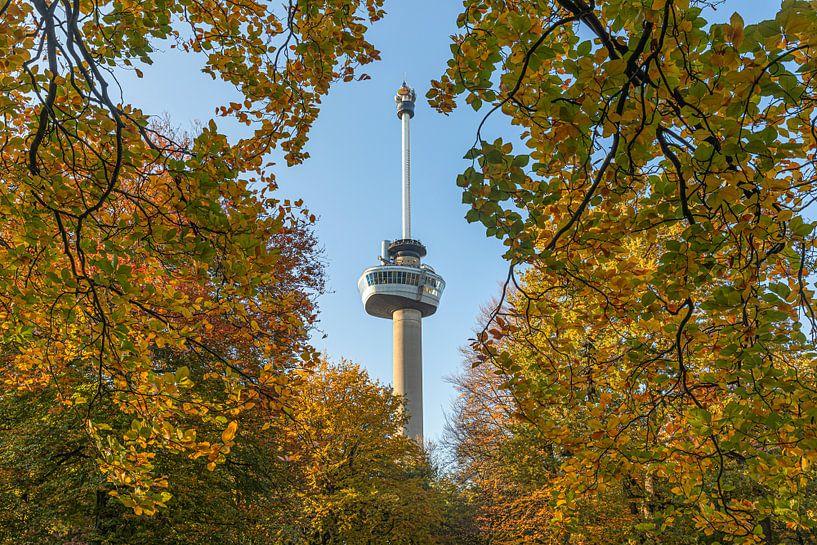 Het Park en de Euromast in Rotterdam in herfstkleuren van MS Fotografie   Marc van der Stelt