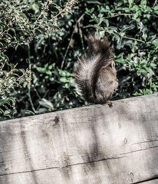 Een eekhoorn zittend in de tuin van MirjamCornelissen - Fotografie