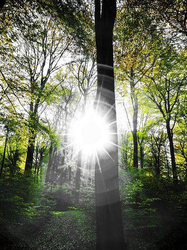 Sunlight in the forest van