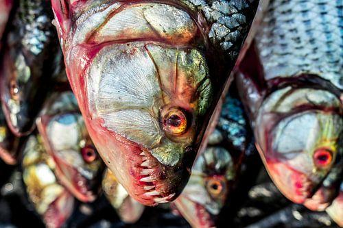 Tiger Fish van Steven Groothuismink