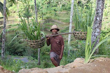 Indonesië: Javaanse arbeider van