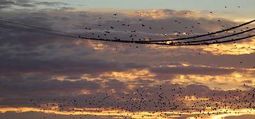 Vogelcollectie van Heike Hultsch