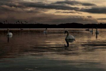 Het zwanen meer
