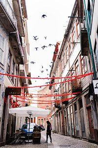 Vogels in de oude stad van Porto van