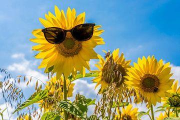 Zonnebloem met zonnebril van Ans Bastiaanssen