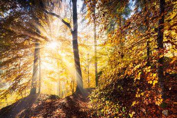 Herfstboslichten van Daniela Beyer