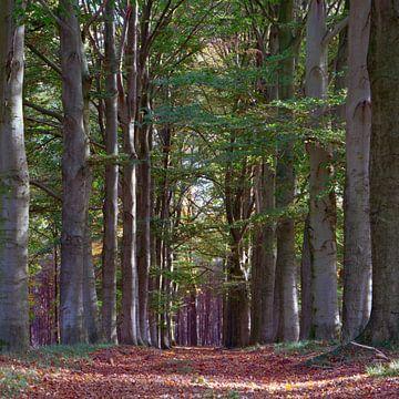 Blick durch den Wald von Erwin Zeemering