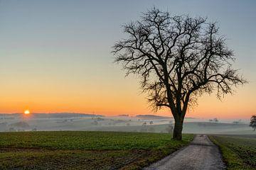 Nebulöser Sonnenuntergang von Uwe Ulrich Grün