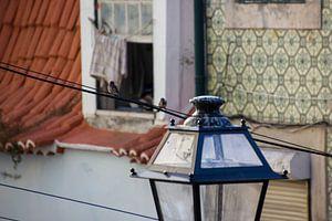Mussen op electra kabel in Lissabon van