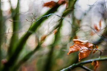 Herfstkleuren.04 (2x3) van Timo Bergenhenegouwen