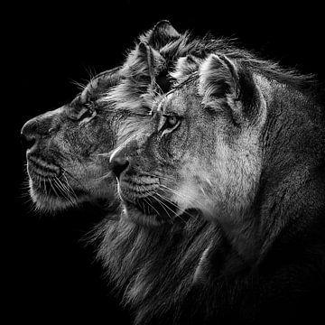 Leeuw en leeuwin portret, Laurent Lothare Dambreville van 1x