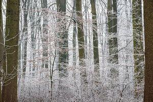 Amelisweerd op een winterse dag