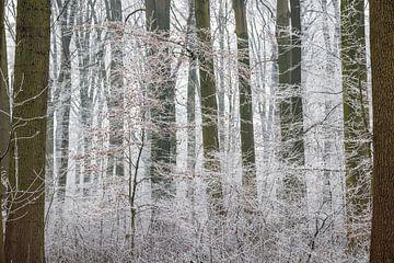 Amelisweerd op een winterse dag sur Juriaan Wossink