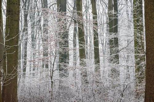 Amelisweerd op een winterse dag van