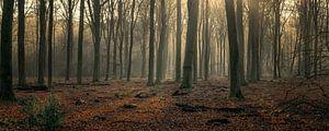 Ruhiger Wintermorgen im Wald von Toon van den Einde