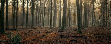 Stille wintermorgen in het bos van Toon van den Einde