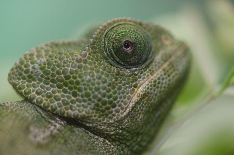 Kameleon van Rene Mensen