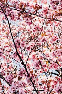 Blüte von Iris Brummelman