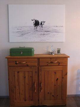 Kundenfoto: Kühe auf dem Land von Sandra Koppenhöfer