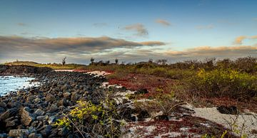 Galapagos van René Holtslag