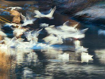 Vogels in beweging van Márton Gutmayer