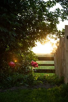 Rose nimmt Sonnenstrahl von Voorbeeld Fotografie