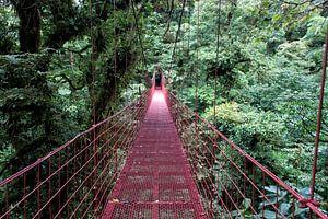 Monteverde; de magie van mist en regenwoud