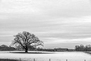 Reuzen eik in winterlandschap