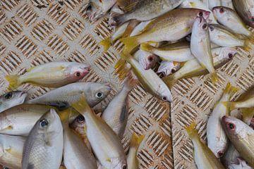 Vissen 2 van Annelies van der Vliet