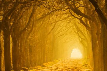 De tunnel van licht von Karla Leeftink