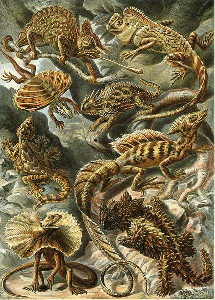 Lacertilia, Ernst Haeckel van Meesterlijcke Meesters