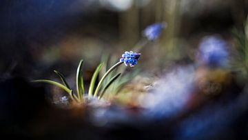 Luft blau von Bob Daalder