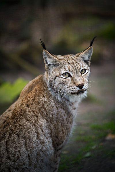 Ich seh dich. von Tierfotografie.Harz