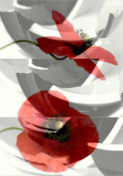 Broken poppies