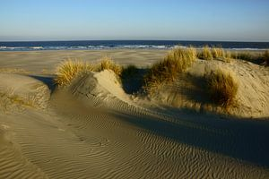 Strand en Duinen