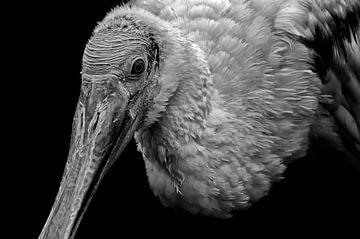 Löffler in schwarz-weiß von Roger te Wierike