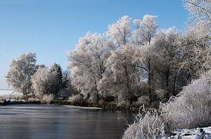 Witte rijp aan de bomen aan de oever van een bevroren meer, prachtig landelijk winterlandschap onder